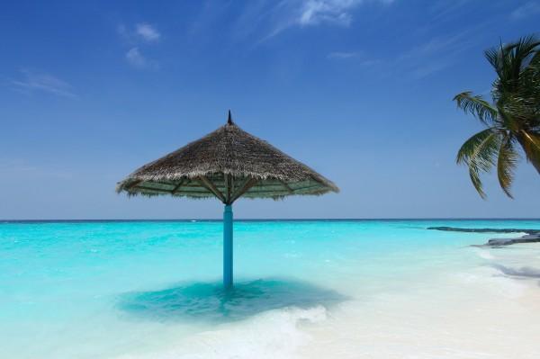 strand og palme